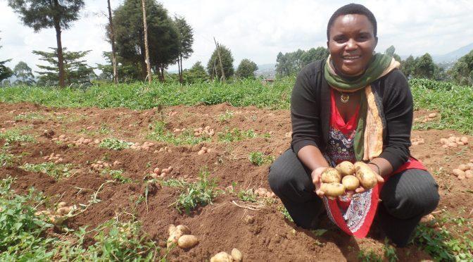Lydie, la reine de la pomme de terre à Butembo