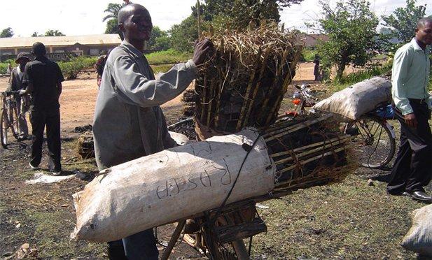 Ces pousseurs de vélos qui nourrissent Mbujimayi
