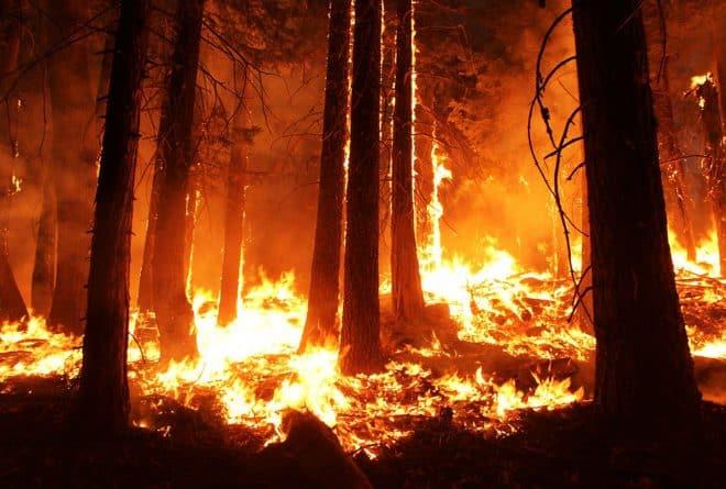 Feux de brousse : la culture sur brûlis brûle l'avenir de la RDC
